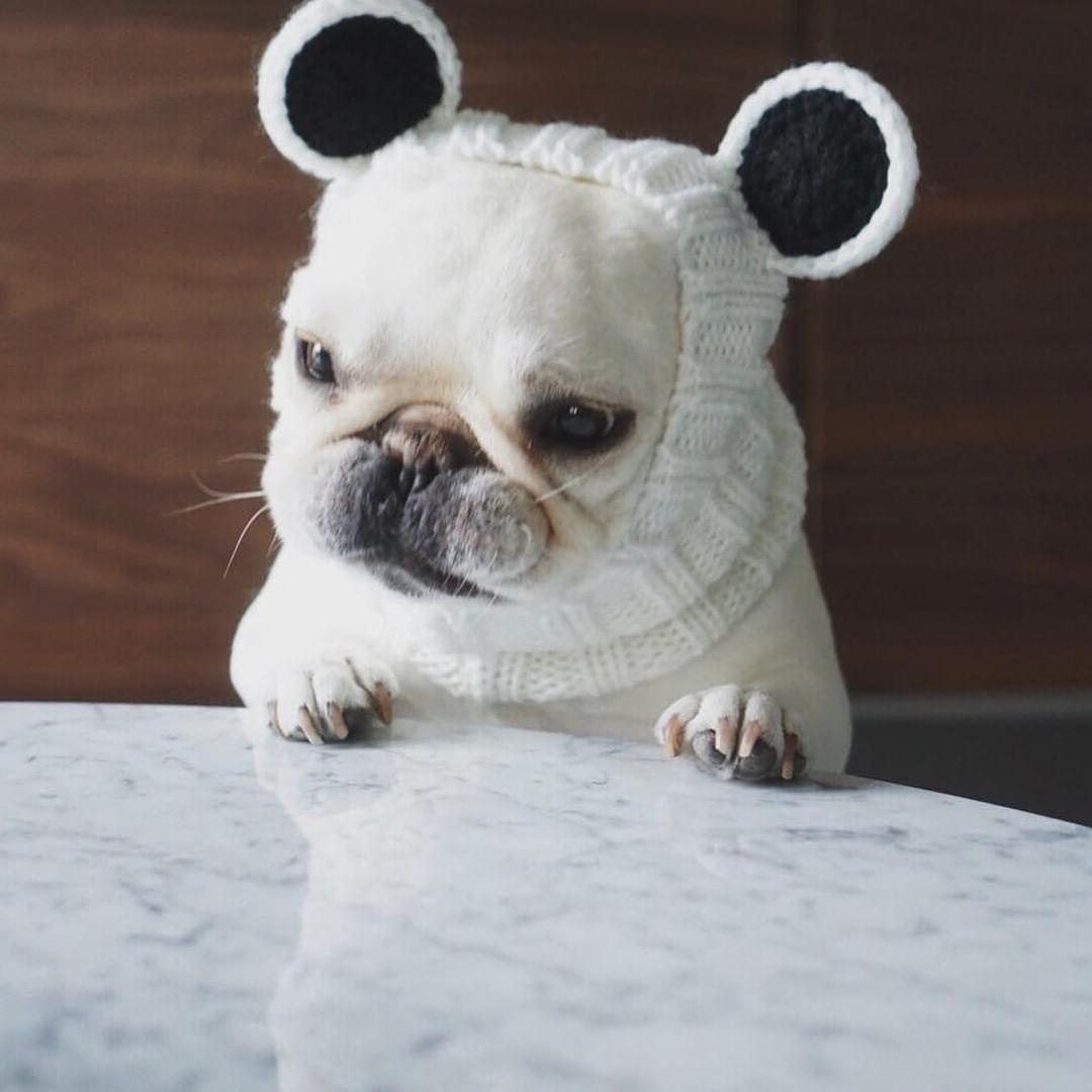 Batpig Pet Supply On Instagram Grumpy Mondays