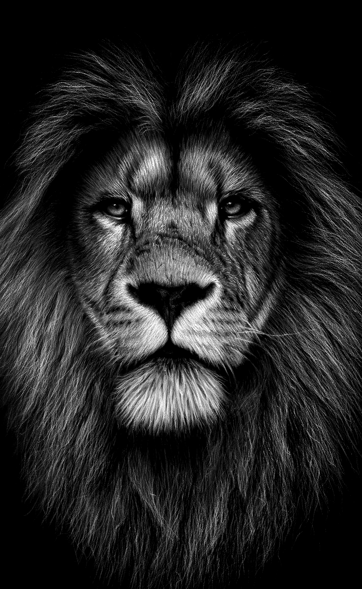 Pin By Stelle Lapin On Tattoo In 2020 Lion Head Tattoos Mens Lion Tattoo Lion Tattoo Sleeves