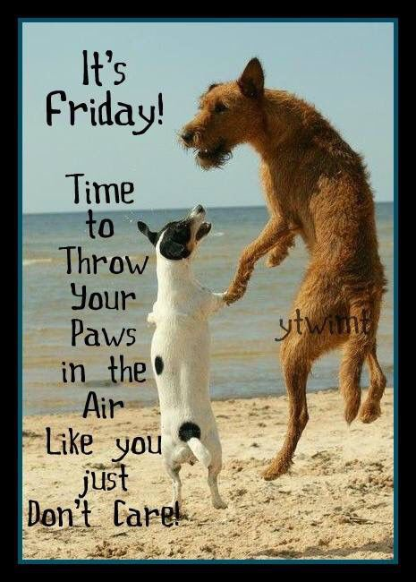 Its Friday Throw Your Paws Up Friday Happy Friday Tgif Good Morning Friday  Quotes Good Morning Quotes Friday Quote Funny Friday Quotes Quotes About  Friday ...
