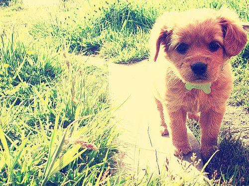 aww puppy :)