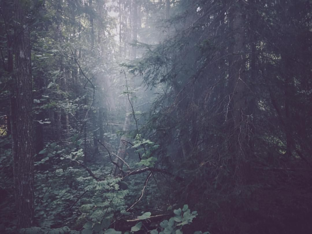 Bildresultat för scandinavian nature