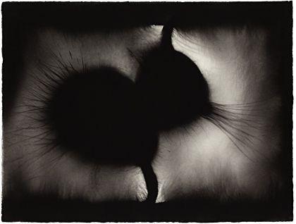 Anish Kapoor | Untitled 2007