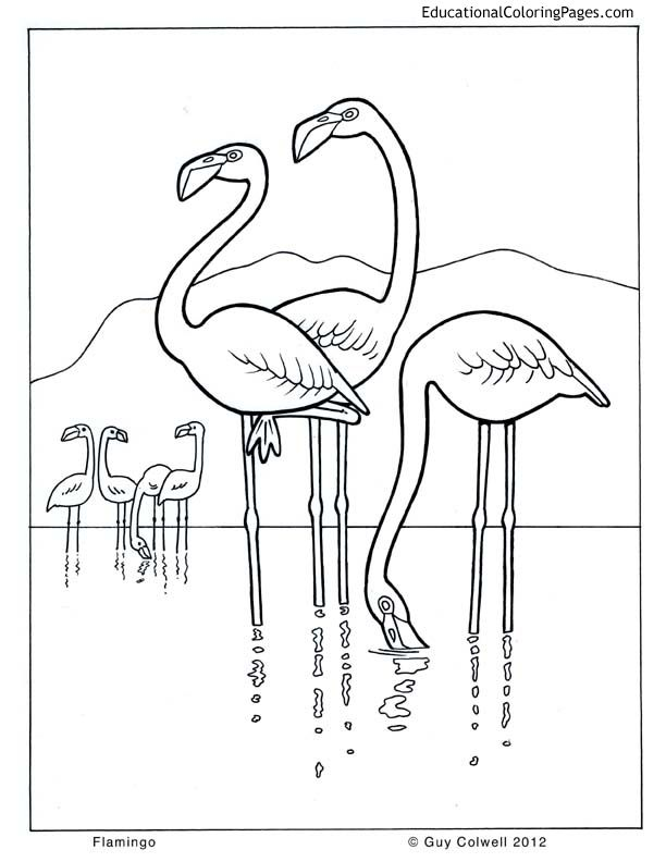 Life Of Pi Coloring Pages Flamingo Coloring Page Bird Coloring