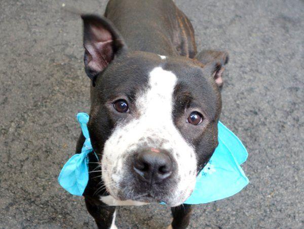 Mister A1040554 Dog Help Cute Names Homeless Pets
