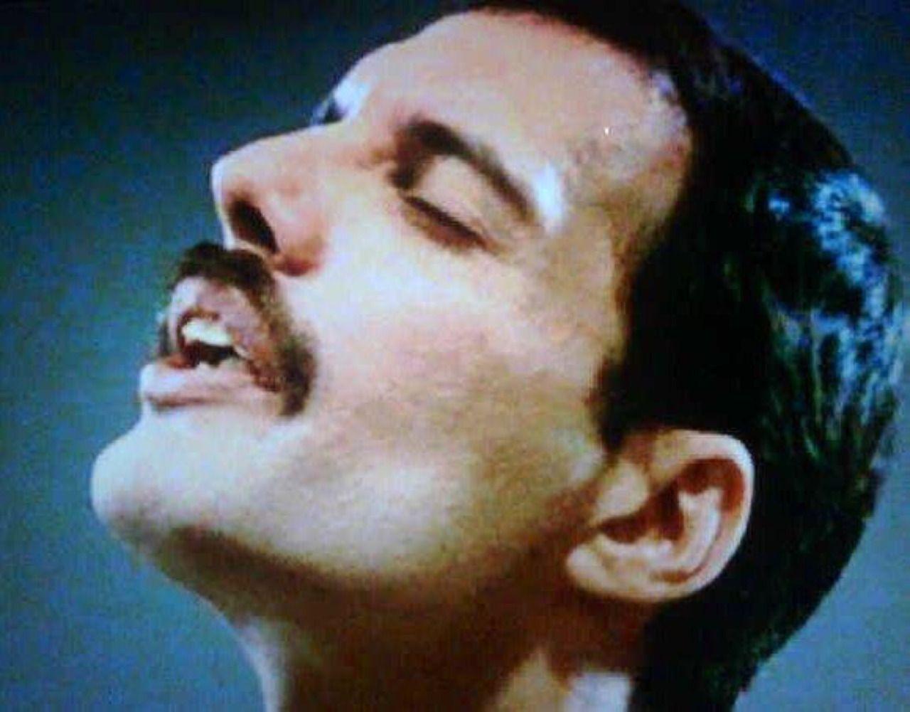 Mercury's Blog — Terrific Freddie Friday pics for terrific people...