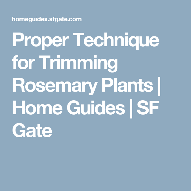 Proper Technique for Trimming Rosemary Plants | Home Guides | SF Gate