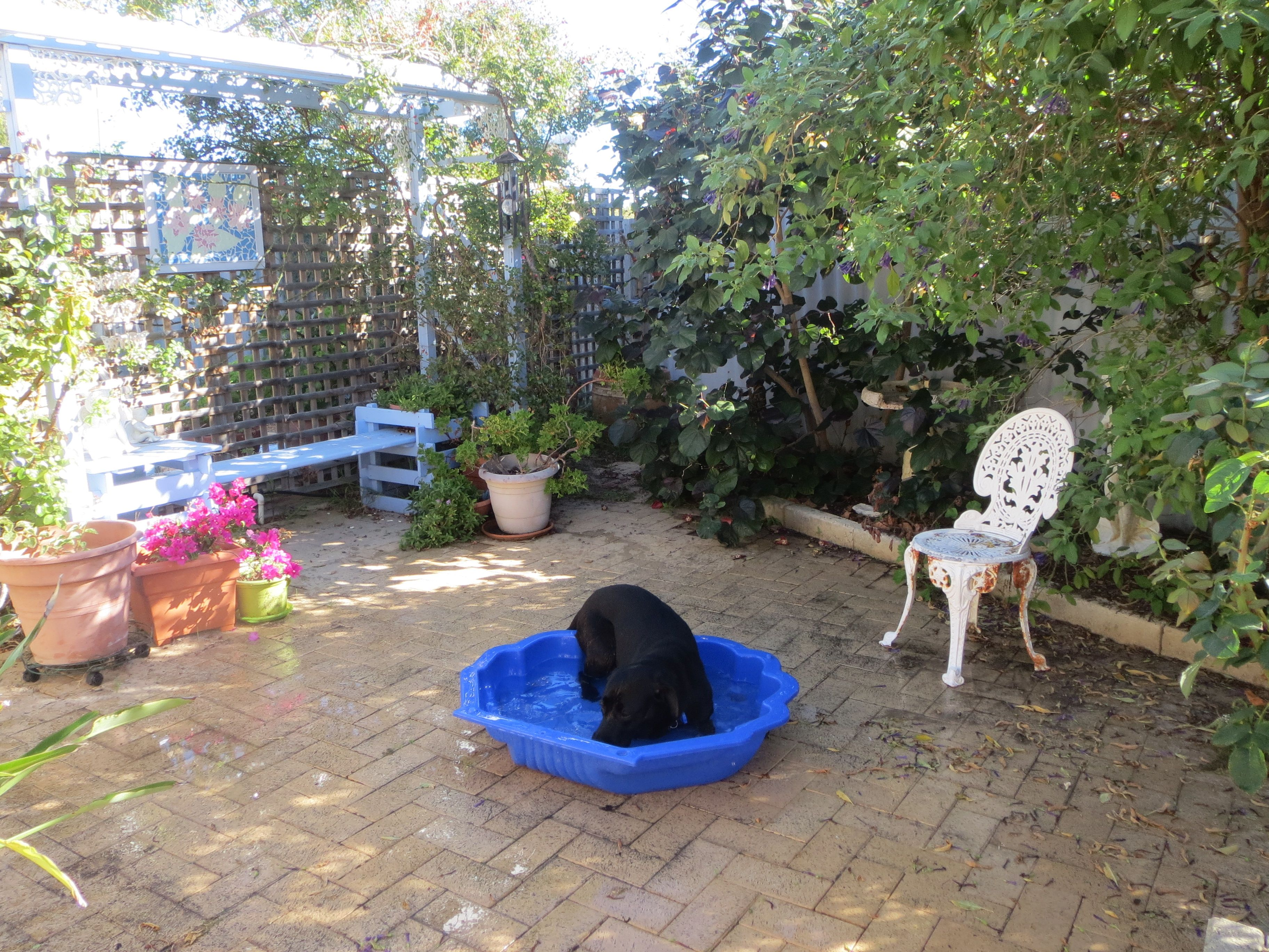 My Seeing Eye Dog Bess playing in her water shell