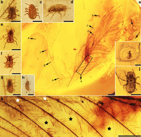 Cretaceous Feathered Dinosaurs Suffered from Lice