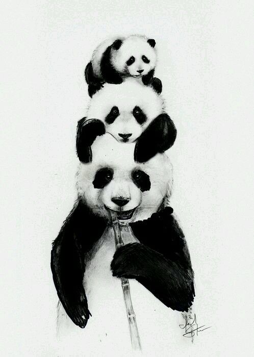 Familia Panda Panda In 2019 Panda Art Panda Panda Drawing