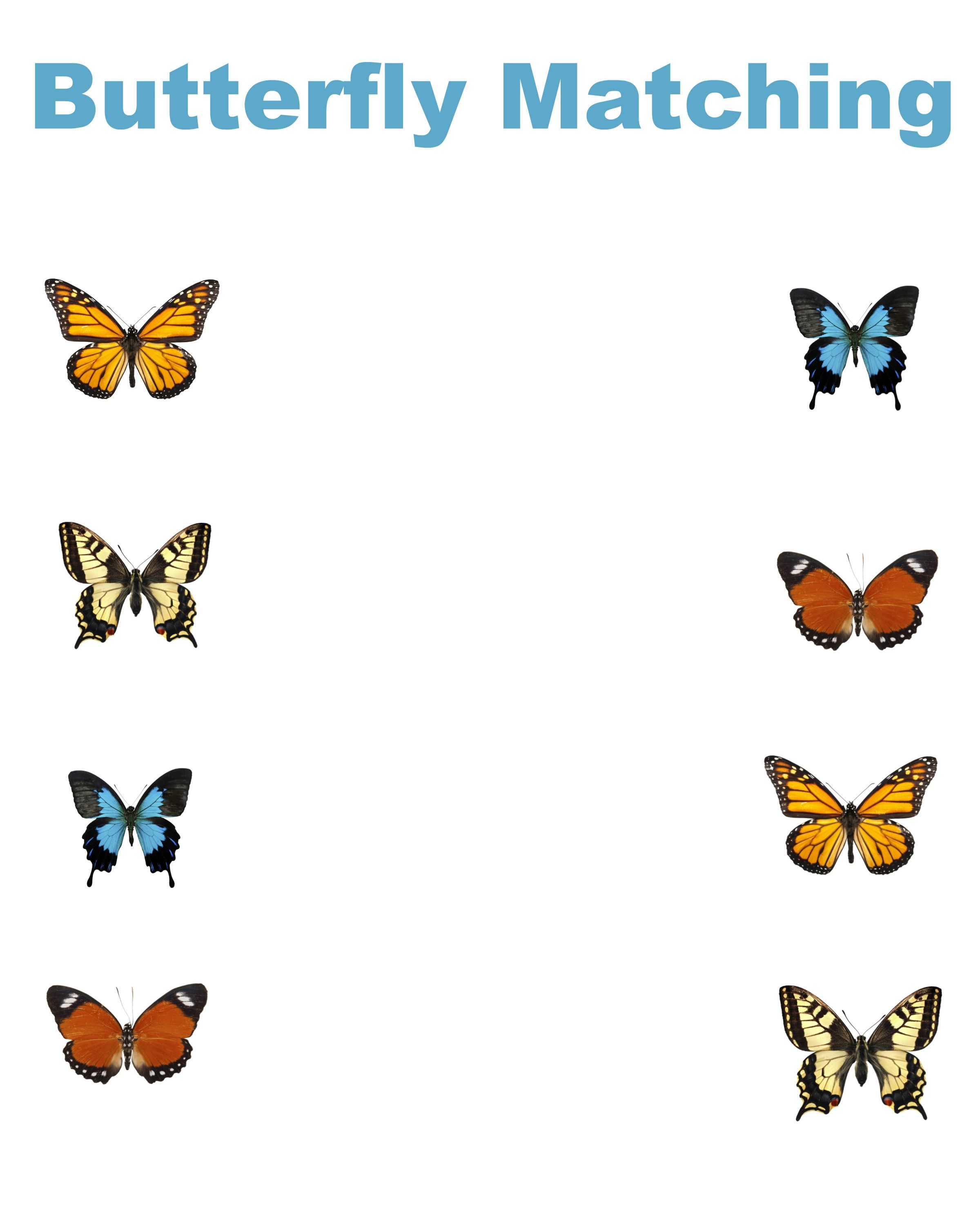 Free Printable Butterfly Matching Worksheet
