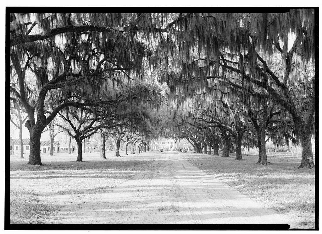 Pin by Alicia Puryear on Ye Ole Charleston National