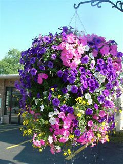 Hanging Basket Hanging Flower Baskets Hanging Plants Outdoor Hanging Plants