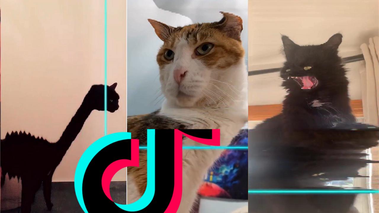 Time Warp Scan Cat Compilation Tiktok Filter 6 Best Cat Memes Cats Funny Cat Memes