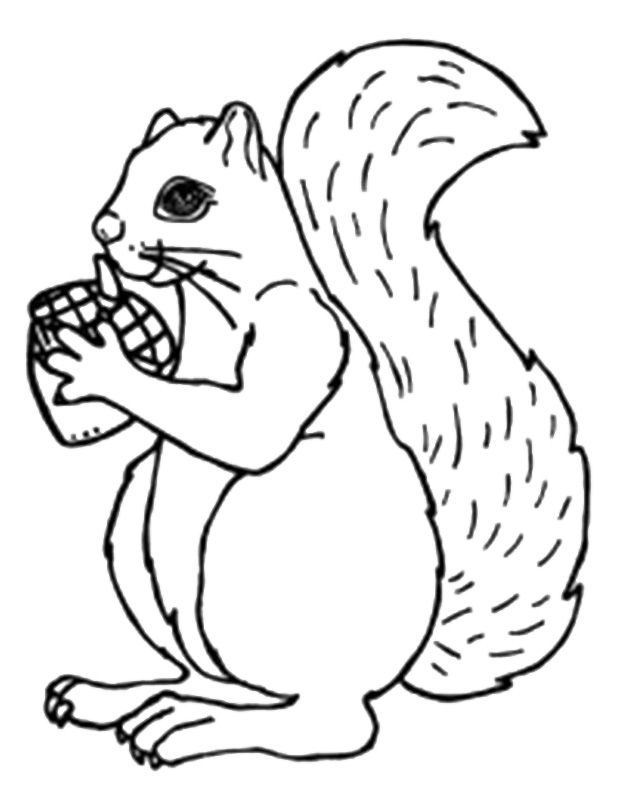 Acorn Gift For Squirrel Coloring Pages - Animal Coloring ...