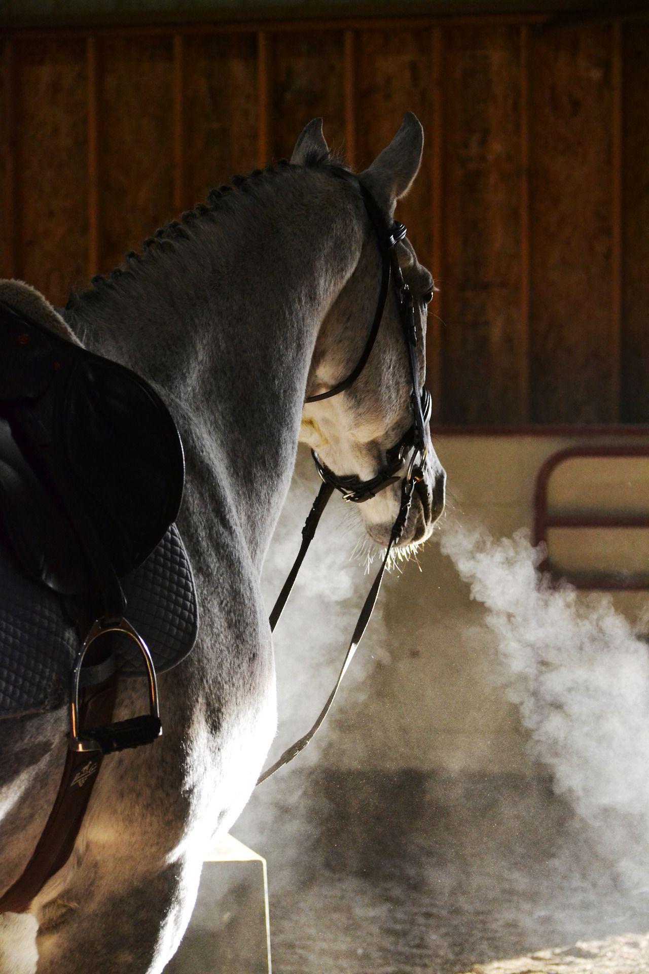 Dapple Grey Paintourstars October 2017 Carolyn Photographie Equestre Photos De Chevaux Image Cheval