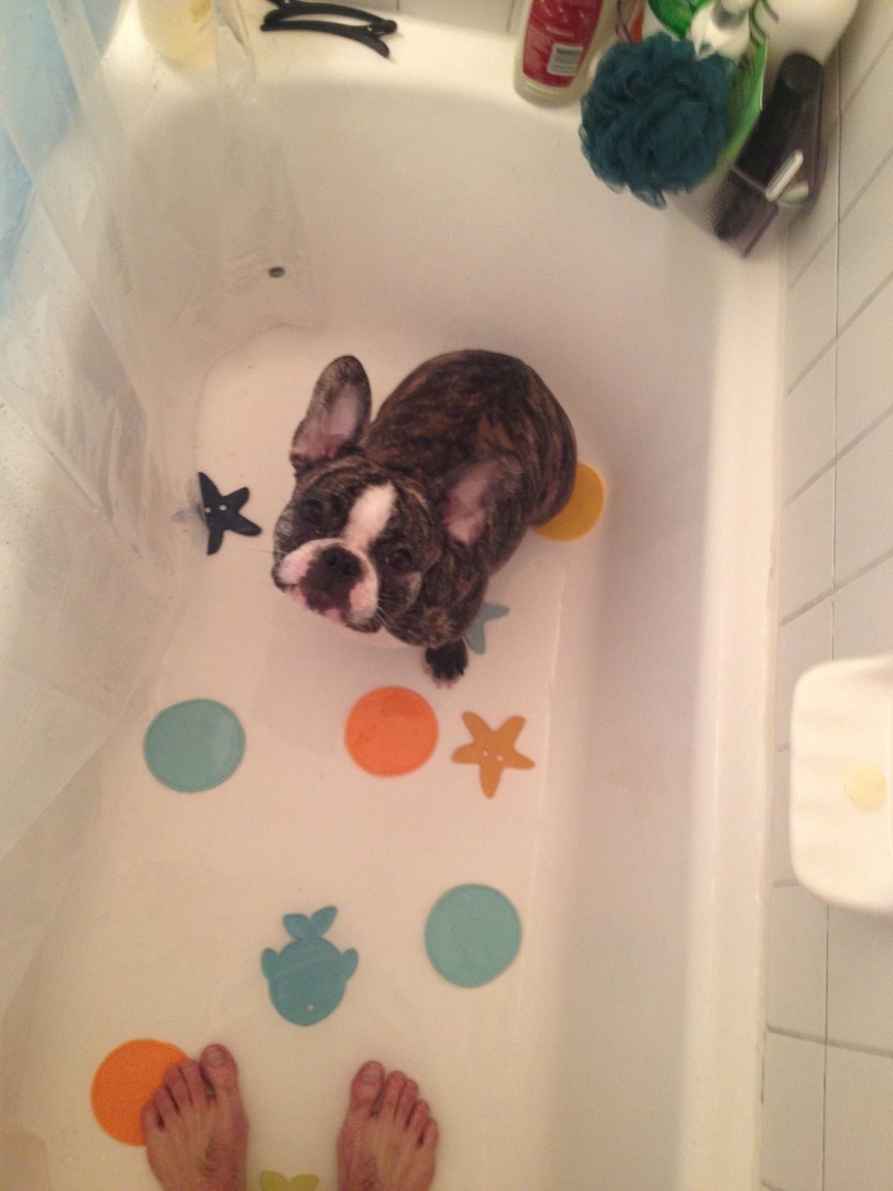 Lenora loves bath time so much she wants in on everyone's.  by Samantha