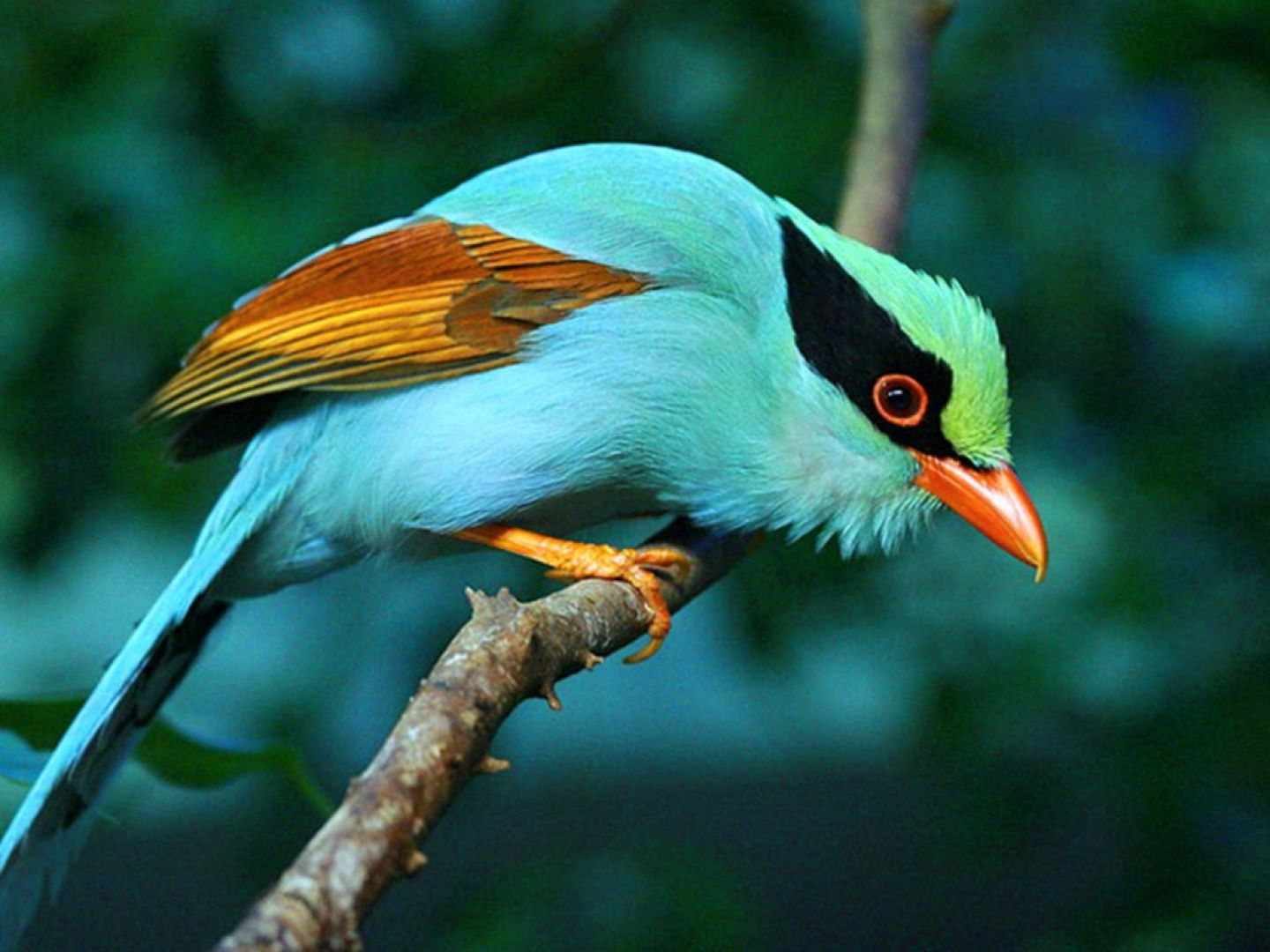 Hd Animal Wallpapers A Very Rare Bird Colorful Birds Birds
