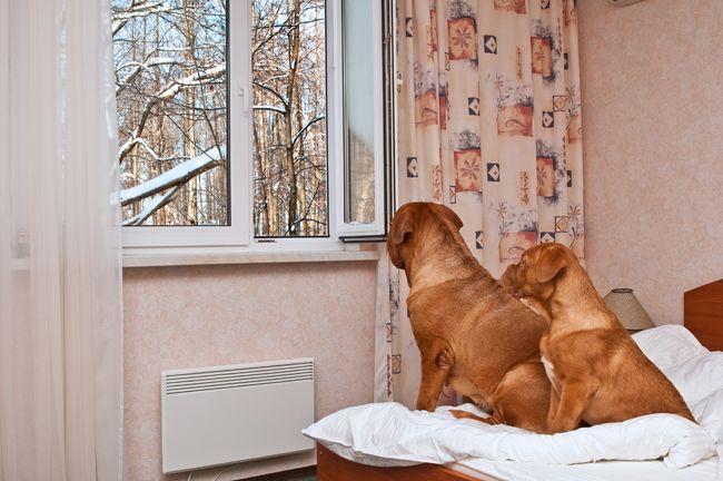 Pin By Na Psim Tropie Blog O Psach On Zachowanie Psow Dogs Home
