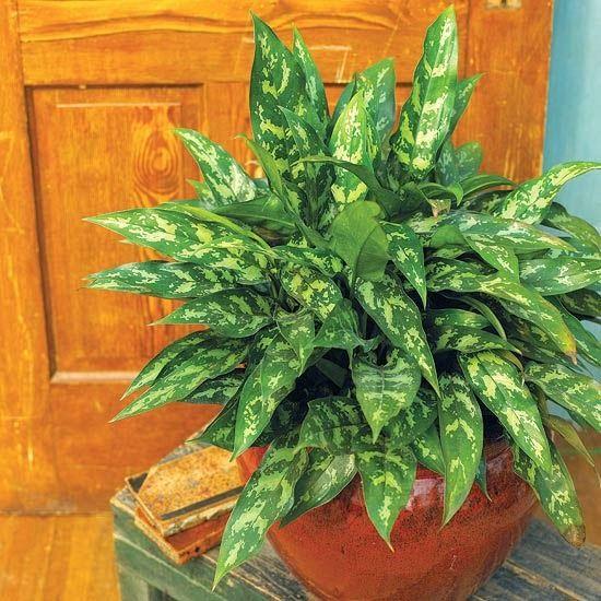 8 plantas que se adaptan a vivir con poca luz y en un - Luz y ambiente ...