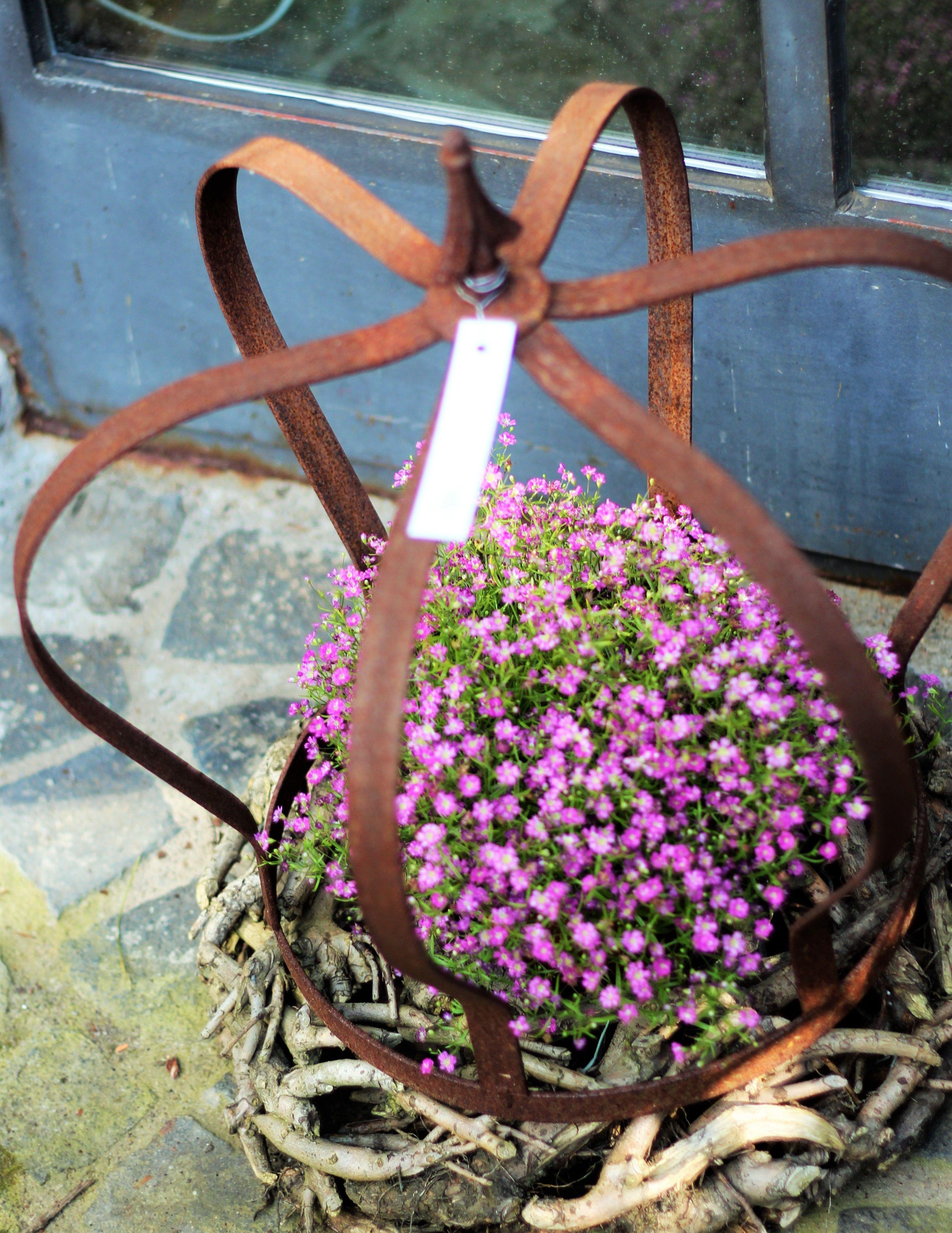 Pflanze lila mit Eisen Krone Rost aus Flacheisen mady by