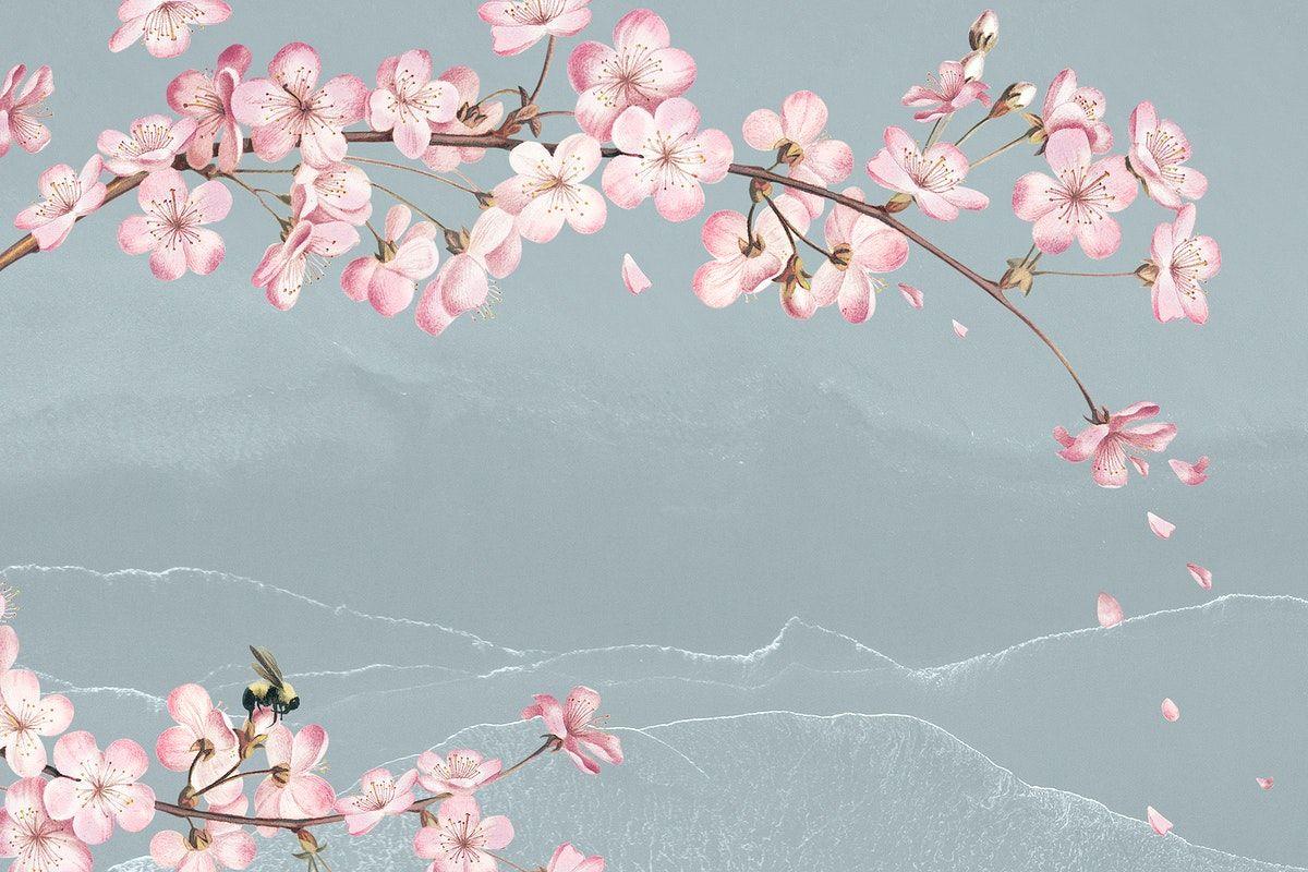 Hoaanhdao Sakura Japanese Cherry Blossom Sakura Cherry Blossom Cherry Blossom Flowers