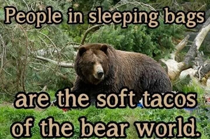 Bear Meme People, Sleep Haha funny, Bones funny, Laugh