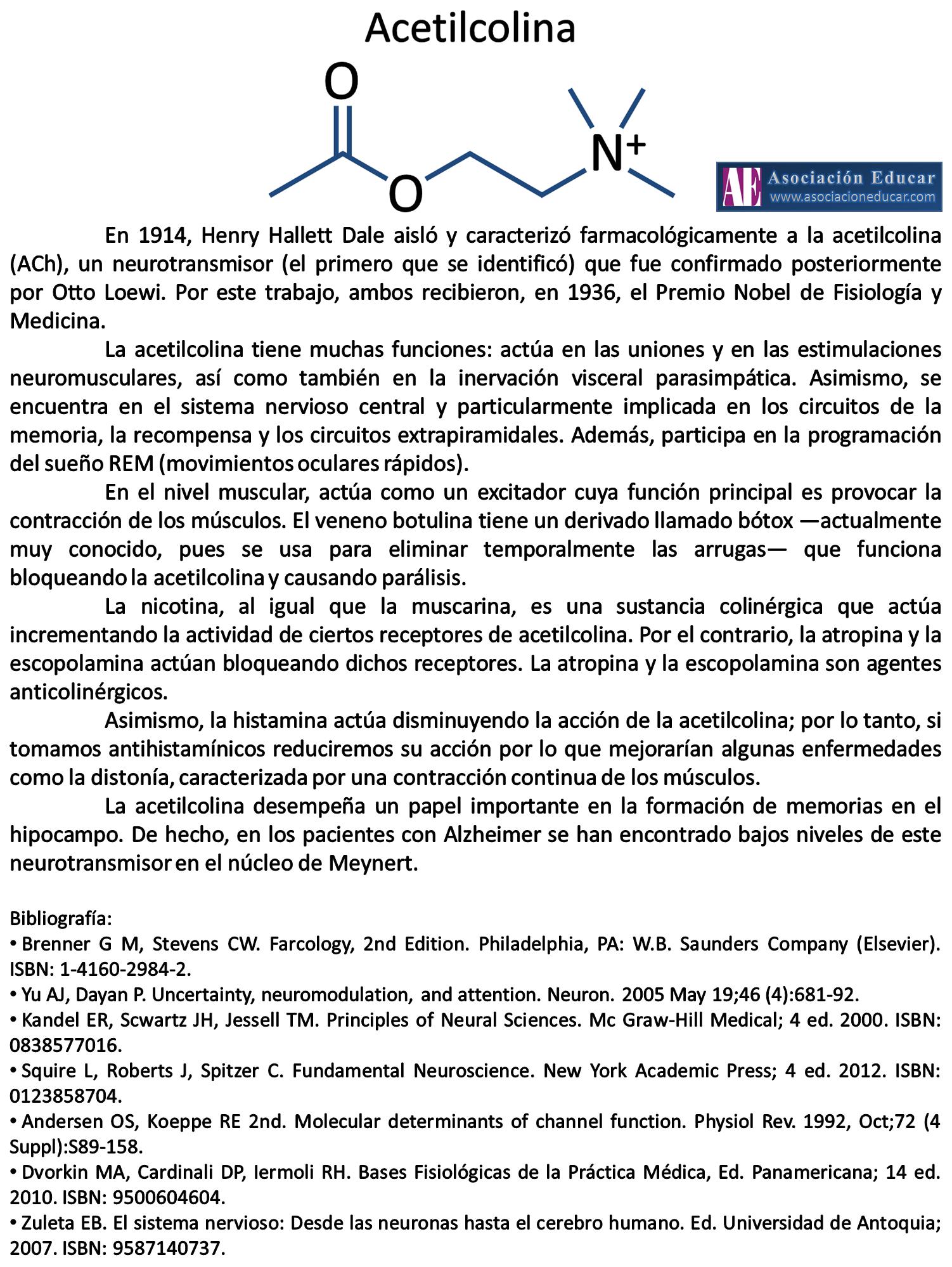 Infografía neurociencias: Acetilcolina (ACh) | Asociación Educar ...