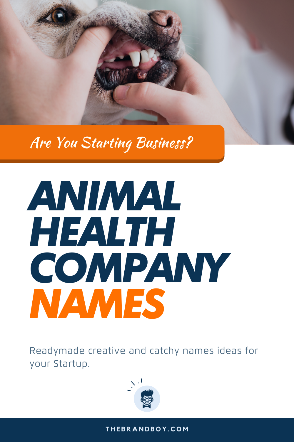 375+ Catchy Animal Health Company Name Ideas Ever in 2020