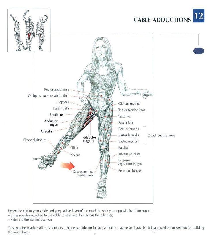 Cable Adductions   fit   Pinterest   Anatomía, Ejercicios y ...