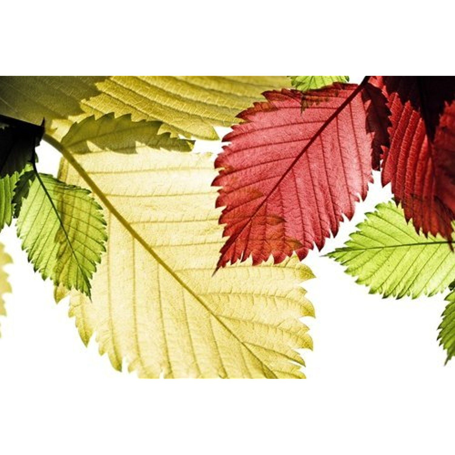 Contemporary Leaves Wall Decor Inspiration - The Wall Art ...