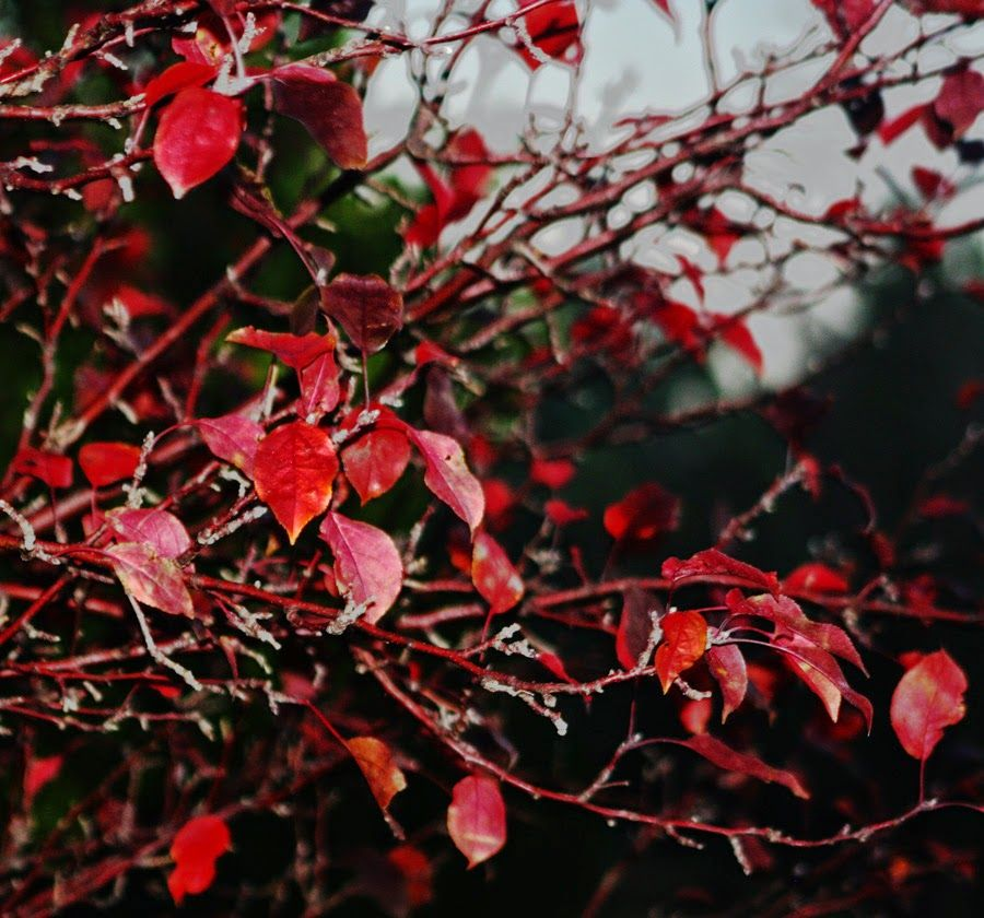 November - the dogwood is almost bare.