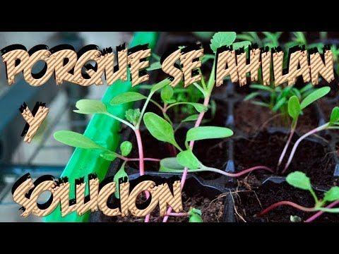 Pin En Huerto Y Jardinería