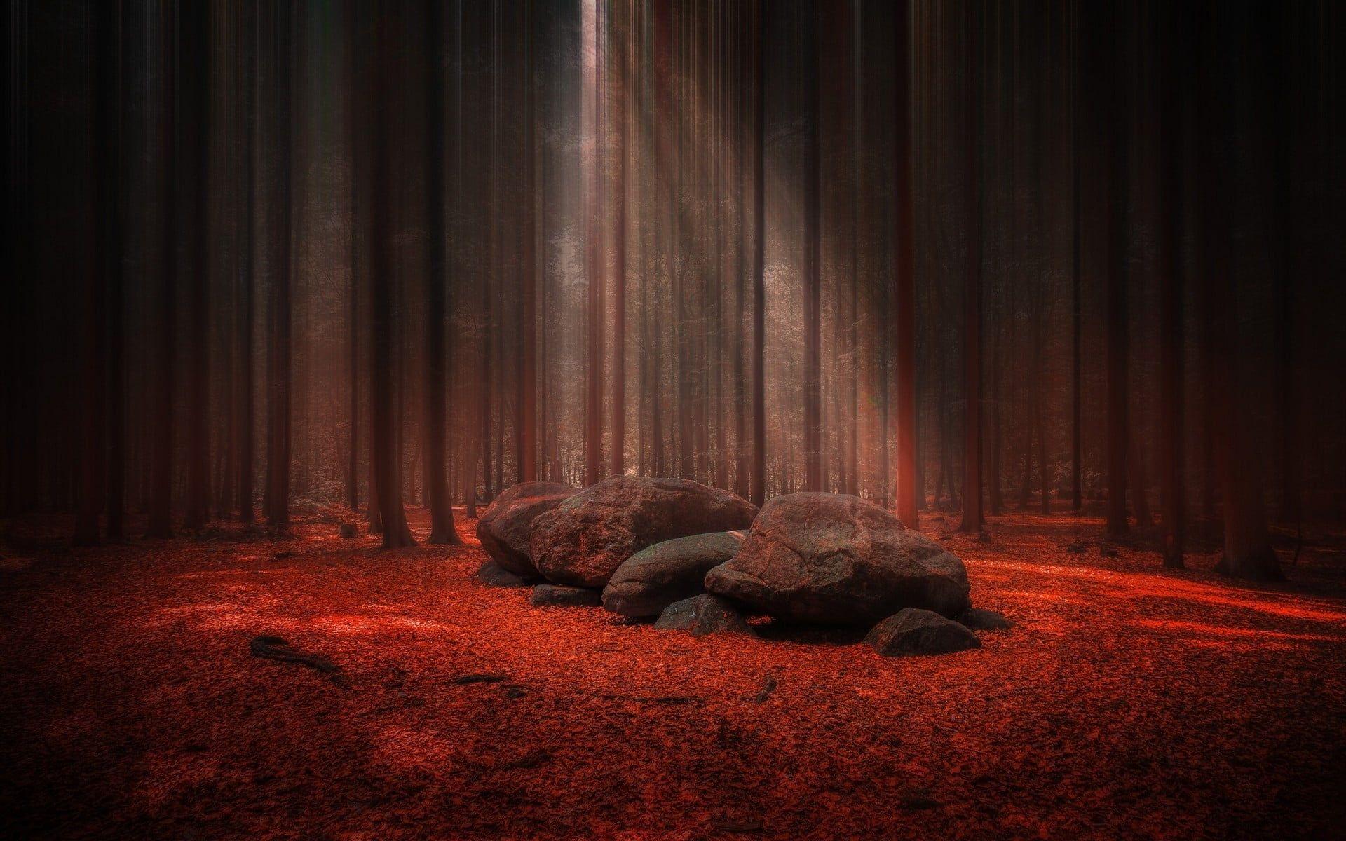 Black And Red Rock Wallpaper Black Rocks On Red Textile Digital Wallpaper Nature Landscape Sunlight Forest Stone In 2020 Digital Wallpaper Hd Wallpaper Wallpaper