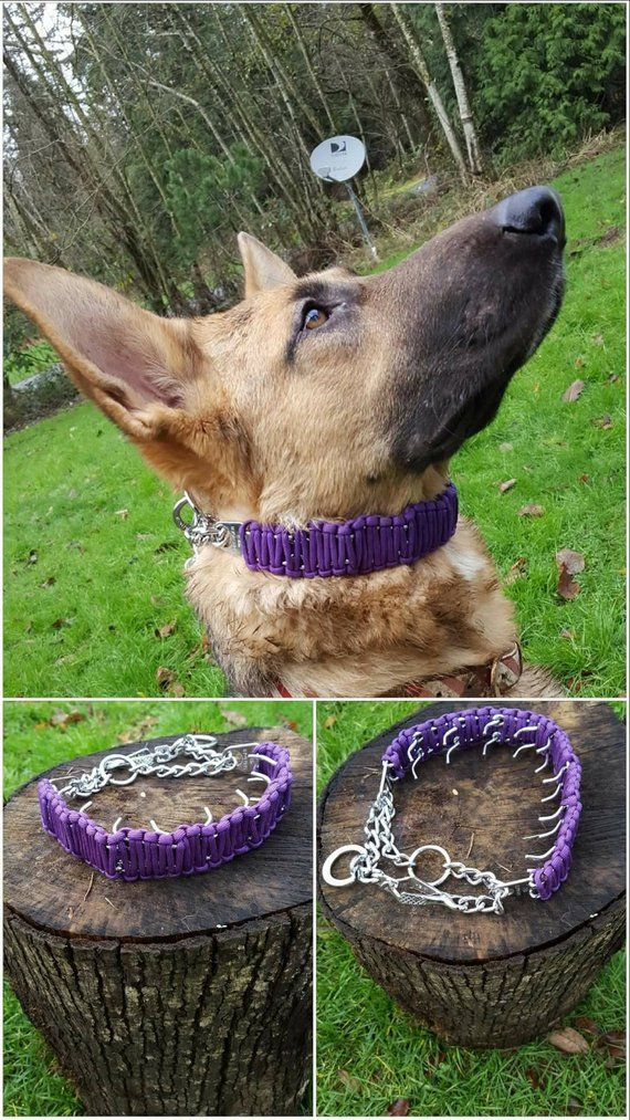 Paracord Covered Prong Collar Send Your Prong Prong Collar