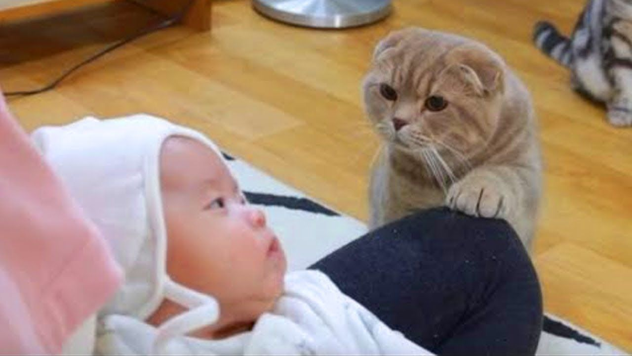 Funny Curious Cats Meeting Newborn Babies For The First Time Cute Cat With Images Cat Meeting Funny Looking Cats Cute Baby Videos