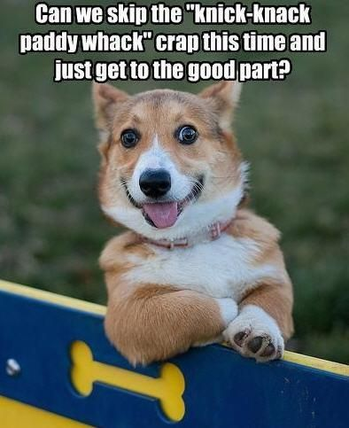 This Adorable Little Corgi With Our Wall Jump Is Having A Blast At The Fort Macarthur Dog Park Dog Parks Funny Dog Pictures Funny Animal Pictures Funn