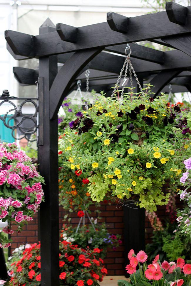 A Day Of Flowers With Oka Outdoor Pergola Black Pergola