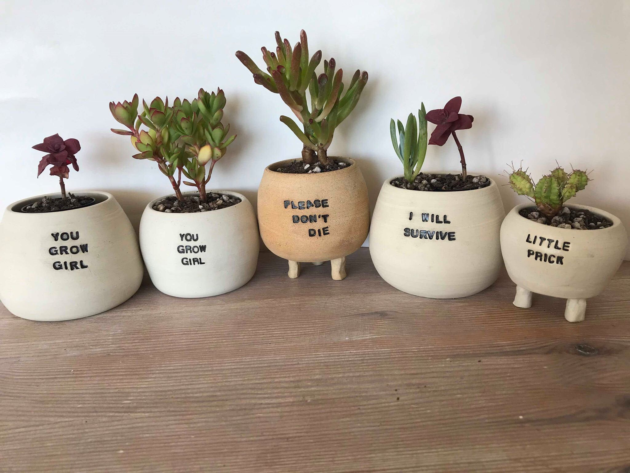 funny cactus planter don/'t be a prick