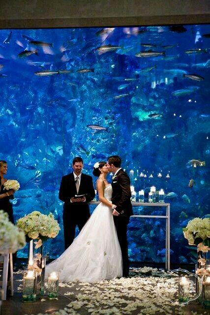 Aquarium Themed Wedding Aquarium Wedding Wedding Dream Wedding