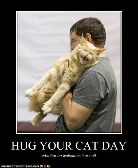 HUG YOUR CAT DAY | Funny animals, Funny pictures, Funny cat memes