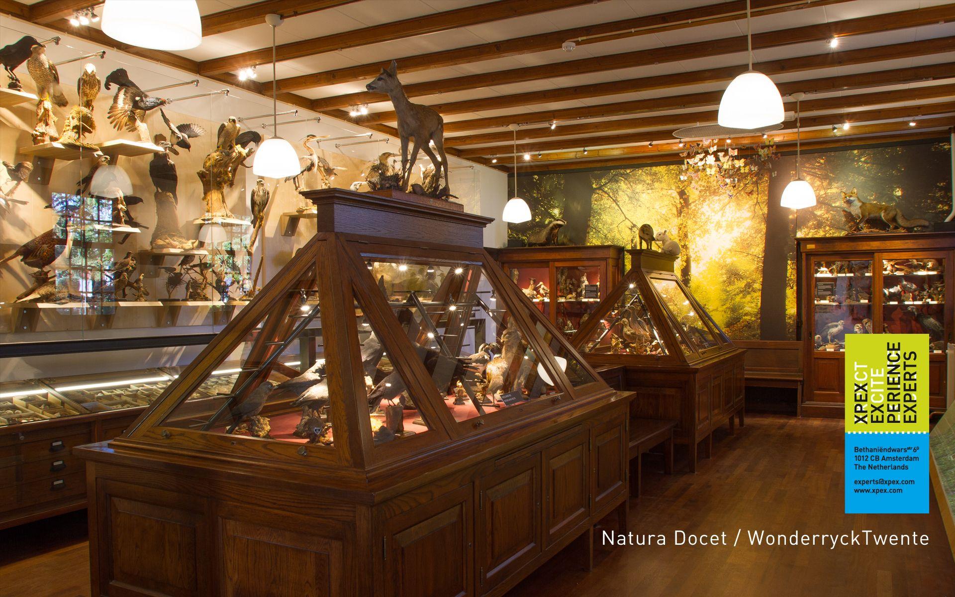 Museum en bezoekerscentrum Wonderryck Twente Denekamp. Nieuwe vitrines met een overdaad aan opgezette dieren. Embalmed animals.