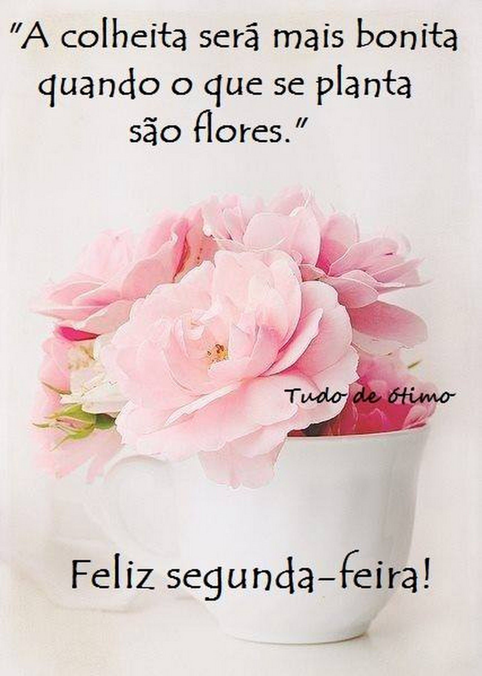 Segunda Feira Dias Da Semana G Morning Sweetest Day E Special Words
