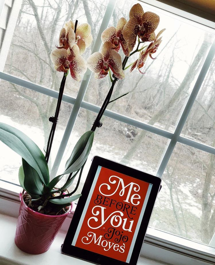 Currently (Re)Reading: Me Before You | Jojo moyes, Me ...