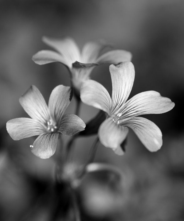 Black and white flowers by rob523 deviantart com on deviantart