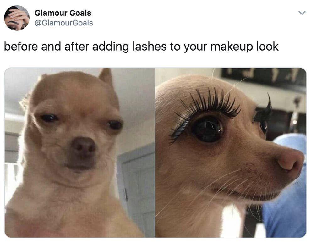 100 Chihuahua Memes That Ll Make You Laugh Harder Than You Should Funny Dog Memes Funny Animal Memes Animal Jokes