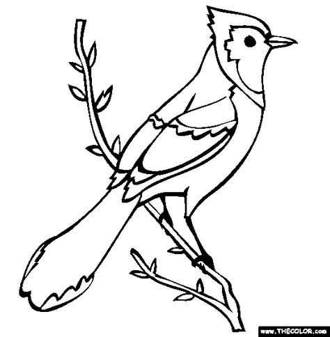Bird To Color Blue Jay Coloring Page Free Blue Jay Online Coloring Bird Drawings Bird Coloring Pages Blue Jay