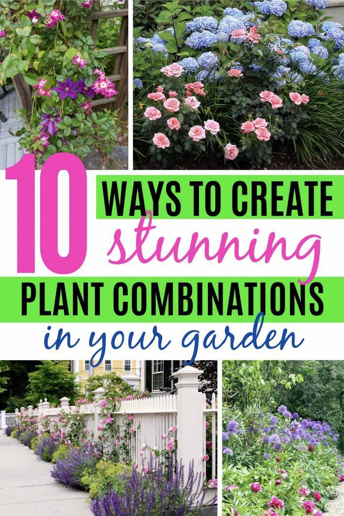 These tips for creating plant combinations in your yard will help make your garden landscaping look beautiful. Great ideas for updating your garden design with beautiful flowers, bushes and perennials. #fromhousetohome #gardendesign #gardenlandscaping #plants #perennials