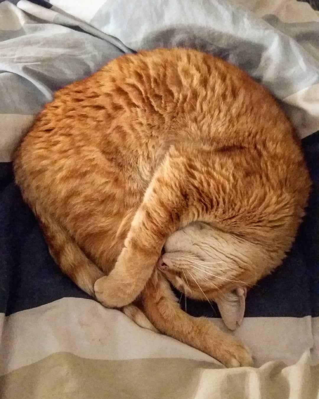 6 Schlafpositionen An Denen Du Erkennst Wie Sich Deine Katze Fuhlt