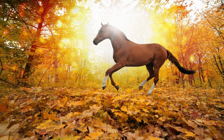 Most Inspiring Wallpaper Horse Scenery - b80ddbac100aaa74885bda5b127ca74d  Trends_71648.jpg