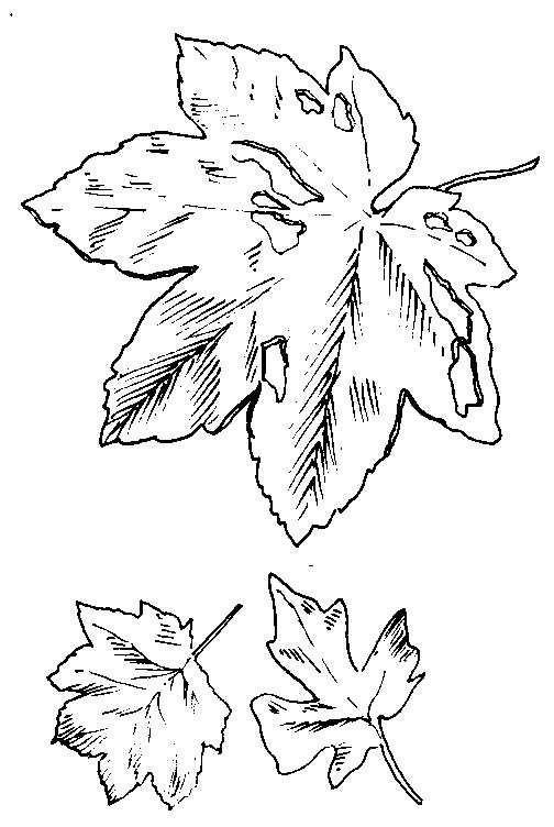 Dibujos para Colorear Naturaleza 34 | Dibujos para colorear para ...
